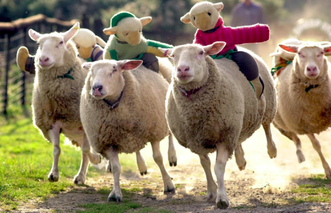 The Big Sheep - Best family holiday idea