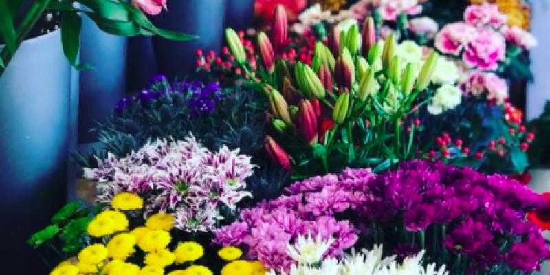 Exmoor Flowers